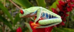 Surreal Frog